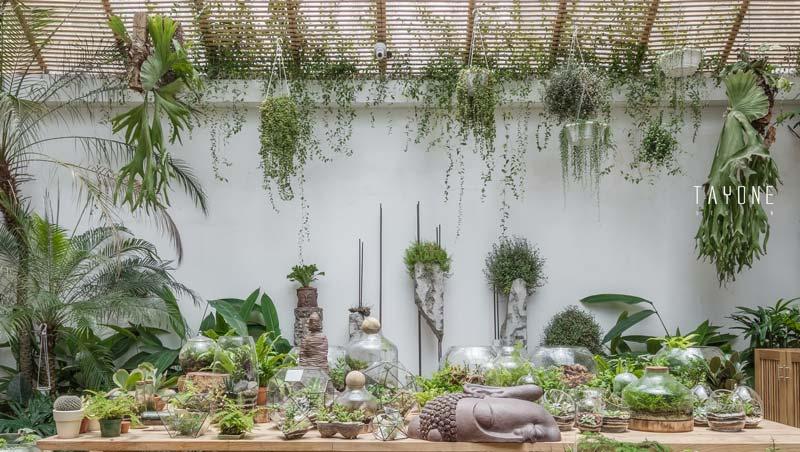piante verdi sospese e in vaso