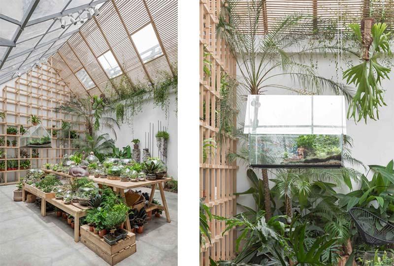 esposizione di piante tropicali