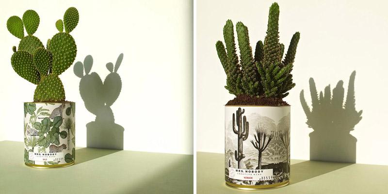 piante grasse decorative