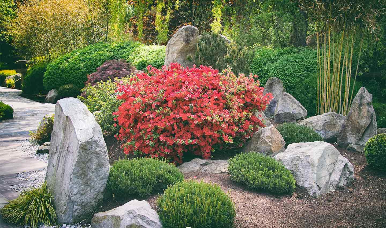 giardino con Nandina domestica